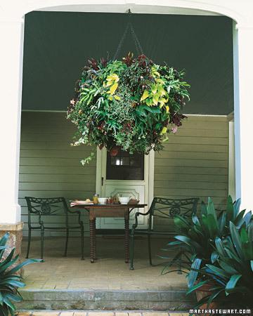 Hangplanter