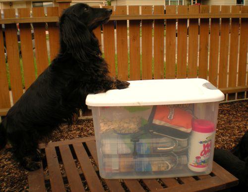 Dog Box 013
