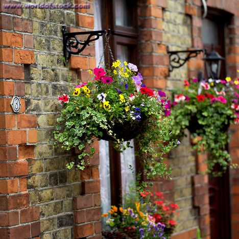 Hanging-baskets2