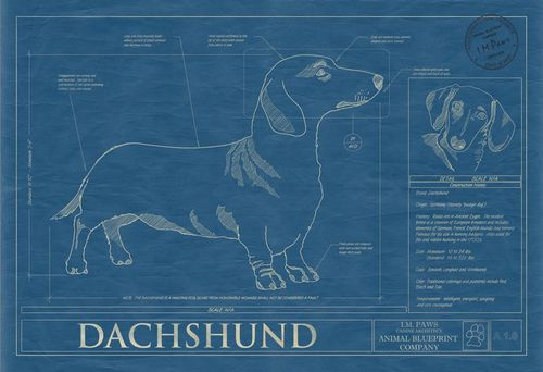Animal blueprint dachshund
