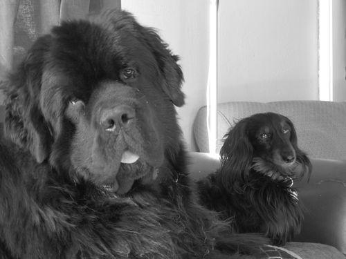 Foyle and Hazel