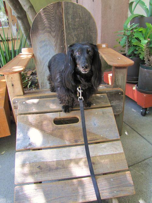 Ernie at Garden Store