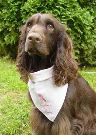 Barking for a cure bandana