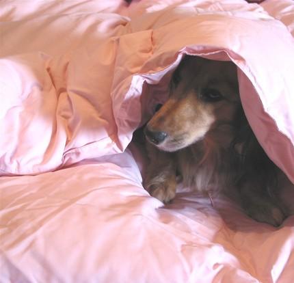 Rendachs Pink Snuggle Sack