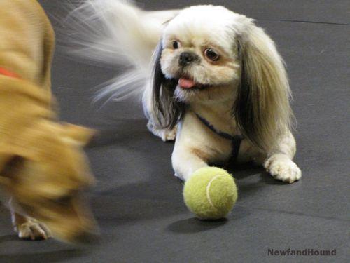 NH Metrodog Ball