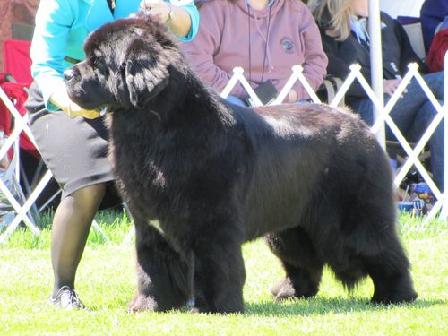2010-05-05 Italy dog