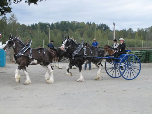 Snohomish Clydesdales 2
