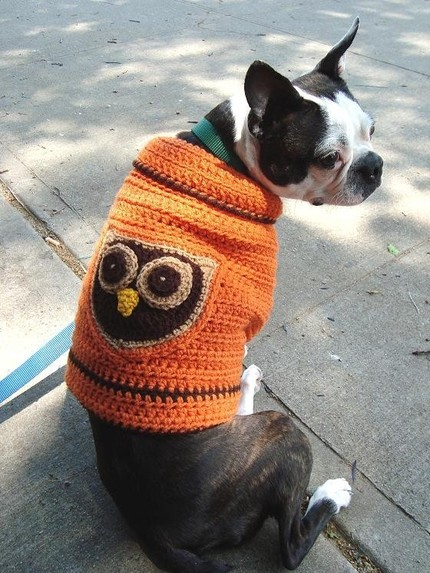 Aandboriginalsdogs owl sweater 2
