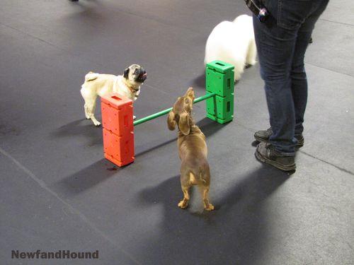 NH Metrodog Jump