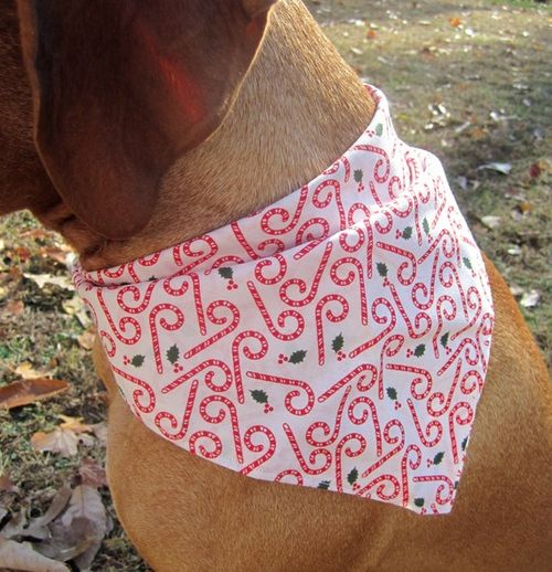 Canine Design Candy Cane Scarf