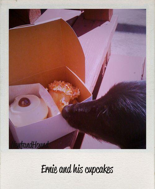 2011-02-25 NH Ernie cupcake 5