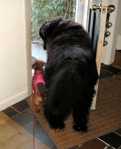 Ollie and stewie