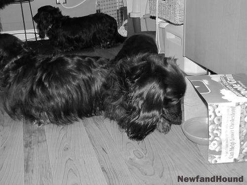 2011-01-17 Nosework Week 1_3