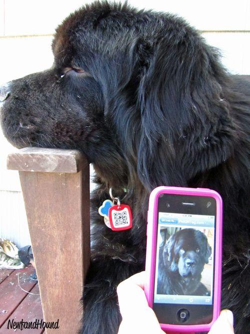 2011-05-08 NH Pet QR Tag 1