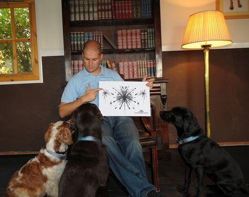 Flickr Dog Therapist Steve Mann