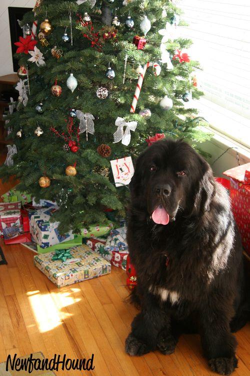 2011-12-25 Foyle Christmas copy