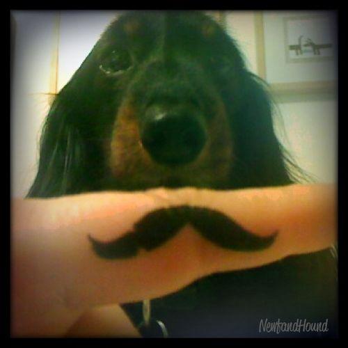 2011-12-29 Mustache Pic 4