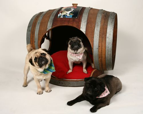 Wm Duff pugs in barrel 1