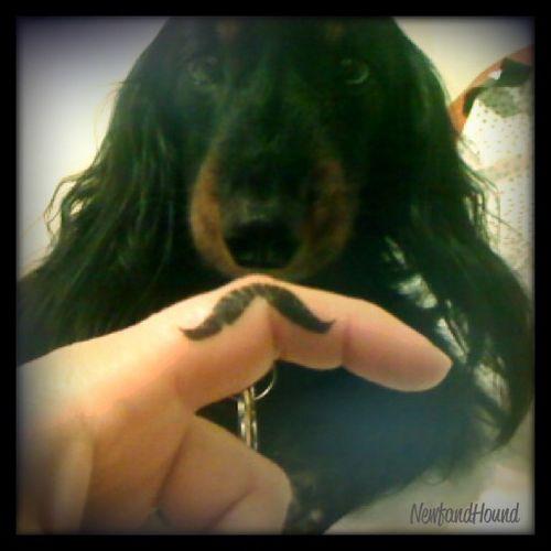 2011-12-29 Mustache Pic 2