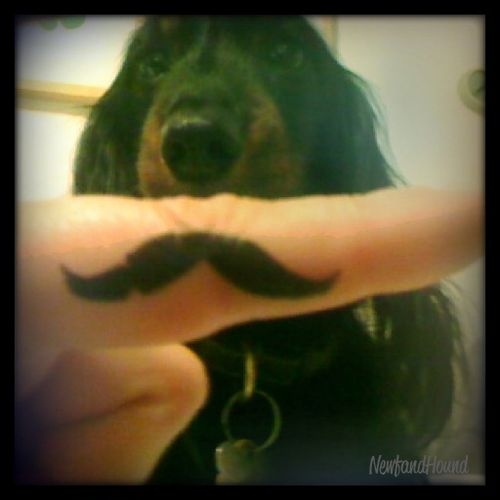 2011-12-29 Mustach Pic 1