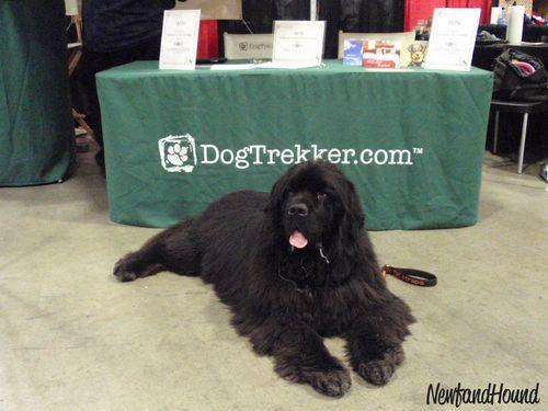 2012-02-04 Dog Trekker