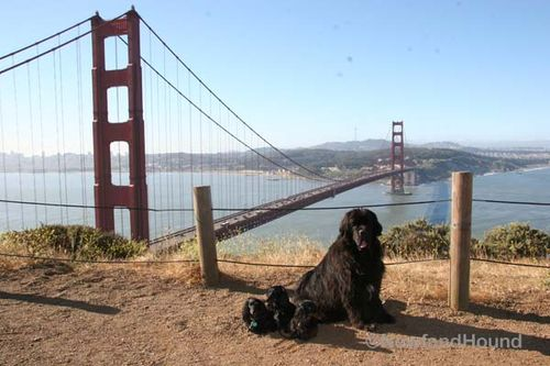 2012-06-08 GG Bridge 3