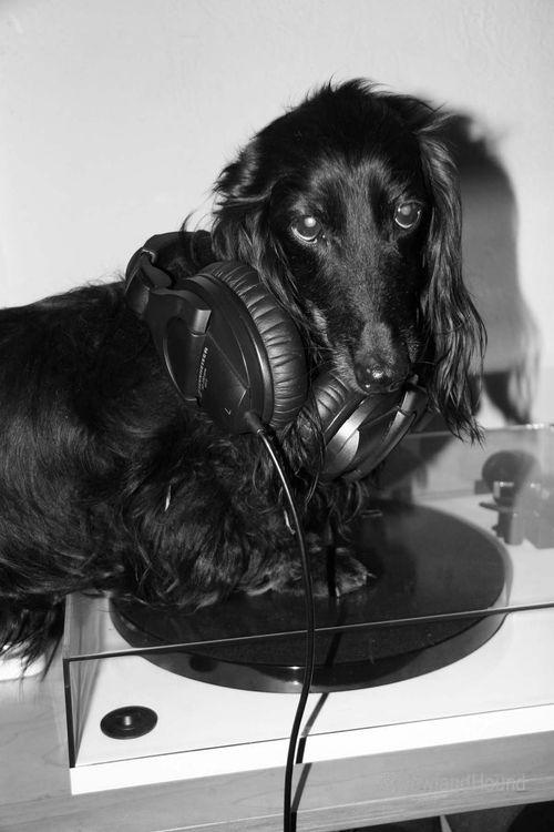 2012-06-14 DJ Track N Hound 1